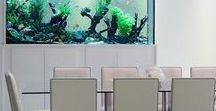 Custom Made Aquarium Tanks / Custom Made Aquarium Tanks | Fish aquarium review site helping beginner fish hobbyists choose the best aquariums • Tropical, marine & custom made fish tanks | WhichFishTank.com