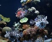 Marine Aquariums / Marine Aquariums | Fish aquarium review site helping beginner fish hobbyists choose the best aquariums • Tropical, marine & custom made fish tanks | WhichFishTank.com