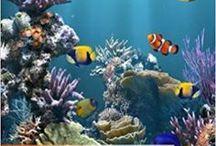 Aquarium Books / Aquarium Books | Fish aquarium review site helping beginner fish hobbyists choose the best aquariums • Tropical, marine & custom made fish tanks | WhichFishTank.com