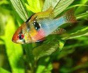 Fish Tank Tips & Tricks / Fish Tank Tips & Tricks | Fish aquarium review site helping beginner fish hobbyists choose the best aquariums • Tropical, marine & custom made fish tanks | WhichFishTank.com