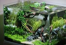Aquarium Plants & Algae / Aquarium Plants & Algae | Fish aquarium review site helping beginner fish hobbyists choose the best aquariums • Tropical, marine & custom made fish tanks | WhichFishTank.com