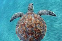 Marine Animals / Marine Animals | Fish aquarium review site helping beginner fish hobbyists choose the best aquariums • Tropical, marine & custom made fish tanks | WhichFishTank.com