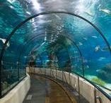 Public Aquariums / Public Aquariums | Fish aquarium review site helping beginner fish hobbyists choose the best aquariums • Tropical, marine & custom made fish tanks | WhichFishTank.com