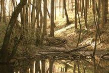 Mutha Nature