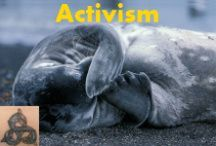 Activism / Petitions to help our animal friends. [Warning: some images may shock. If you don't like seeing them, do something to stop them...like signing the petition]. More calls to action can be found at my Twitter account: @DolphinSeeker30 / by K. Llewellin / Redman