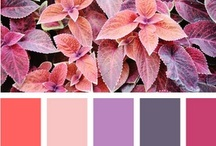Color Love / Color #color #palette / by Mary Aler