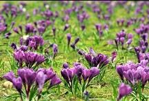 Cztery pory roku: Wiosna 2013!