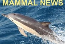 Marine Mammal News / The good, the bad & the ugly of what's going on in the world of marine mammals ~ #science #captivity #whaling #oceanpollution #marinepollution #ovefishing >> You can also Follow me on Twitter @DolphinSeeker30