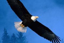 On the wings of an Eagle / Eagles