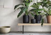 Plantes et Bonsai en décoration d'intérieur / Utiliser une plante ou un bonsaï comme élément de décoration pour nos intérieurs (salon, chambre, cuisine...)
