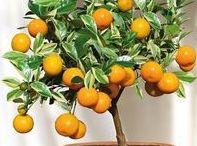 www.maitre-bonsai.fr / Site internet sur l'entretien et la création de bonsai www.maitre-bonsai.fr
