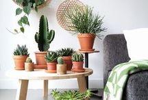 Cactus / Cactus et cactées