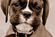 Puppy planning!