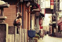 Japan *~* / Best.Place.Ever.