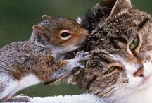 Awwwwww, too cute!!! / the cutest little critters on the planet