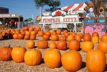 Pumpkin City's Pumpkin Farm