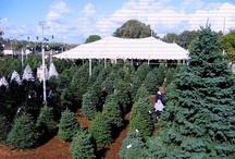 Pumpkin City's Christmas Tree's