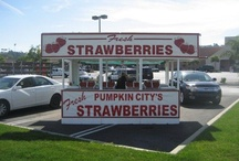Pumpkin City's Strawberries