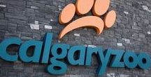 Calgary Tourism / Tourist attractions in Calgary