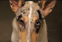 Nessie und die Podencos / Fotos von meinem Hund Nessie und ihren Treffen mit Podis