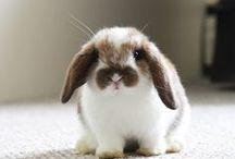 Beautiful Bunnies / Just hopping along, these adorable little animals are sure to warm your heart.