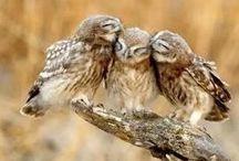 Owls / sowy, sówki
