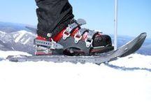 Snowshoe SNOBRDR