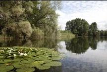 Wildlife Trusts near Shaftesbury (Wiltshire & Dorset wildlife)