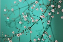 Flowers - September