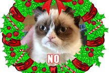 Grumpy Cat / Famous grumpy cat  / by Cindy Snyder