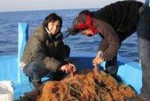 Pesca sportiva / Calendari, tecniche e attrezzature di cattura