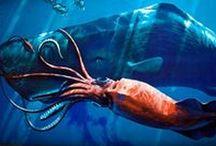 Vita subacquea / Storie, personaggi, ritrovamenti, fondali e scienza in fondo al mare