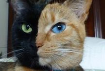 <<<Animals>>> Best Friends . Cats & Dogs