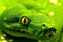 <<<Animals>>> Reptiles