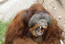 Adorable Animal Smiles / Fun and adorable animal smiles!