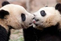 Animal Love / These animals are the most adorable! Showing animal love!