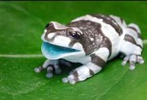 Colorful Animals / Bright and beautifully colorful animals