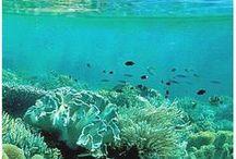 Deniz  güzellikleri