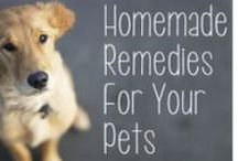 Pet Food & Recipes / Yummy pet food and recipe ideas to keep your pet feeling special and their belly full!