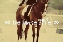 ✦ t h e  h o r s e  l i f e ✦ / I love horses so much!!!!!! They're my life!!! I honestly love horses more than food...that should say a lot!!! ❀✺✩✧∞☆★✞♡♔☼☮☯ / by ʜᴀɴɴᴀ. ☻