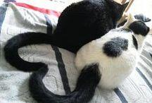 Zwei Katzen sind besser als eine / Katzen werden nicht als Einzelgänger geboren.