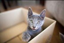 Katzen und Karton