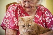 Alte Katzen