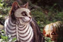 halloween cat looks / cat pet costumes and collars