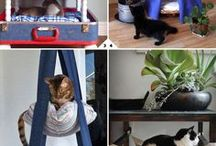 diy kitty / do-it-yourself catcentric projects