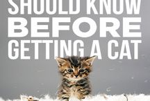 new kitten / tips + items for new cat owners taking care of kittens