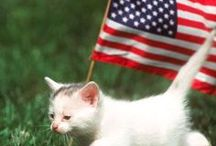 4th of july pets