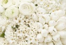 White.........