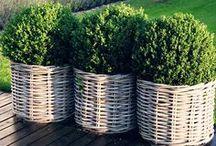 Design for garden.