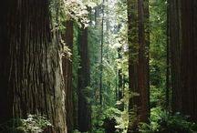 trees / いろんな場所のいろんな木